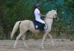 poney b ou c a vendre